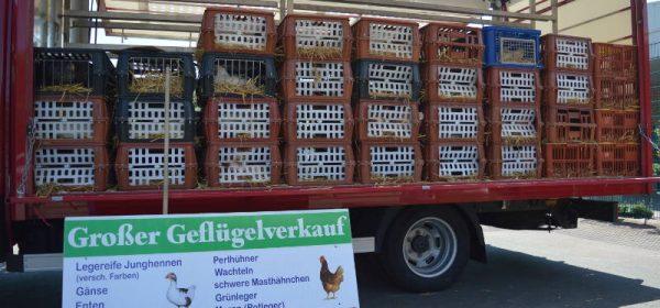 Geflügelverkauf bei der HTG
