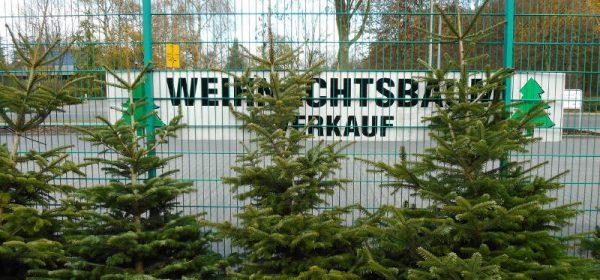 Großer Weihnachtsbaumverkauf