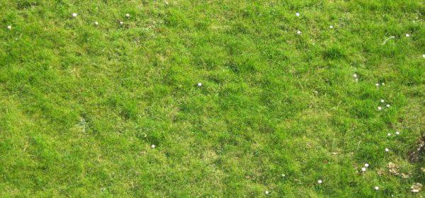 Moos im Rasen?  Vertikutierer-Verleih