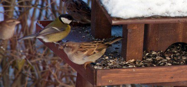 Wintervogelfutter in großer Auswahl!