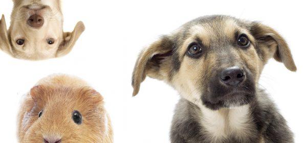 Hitzetipps für Haustiere
